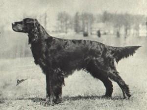 breedstandard